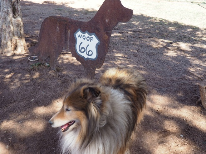 Woof 66 on Route 66