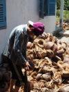 Processing coconuts