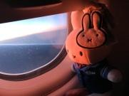 Miffy headed to amsterdam